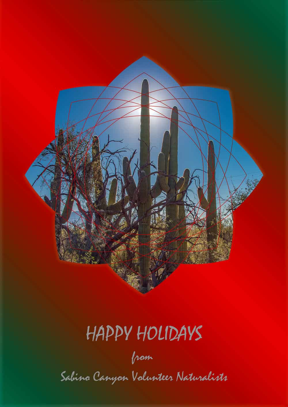 HAPPY HOLIDAYS FROM THE SCVN BOARD & TEAM COORDINATORS