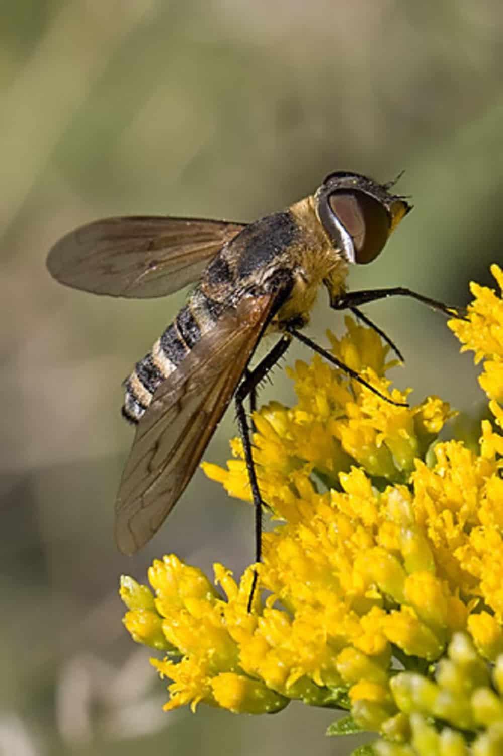 Flies 4