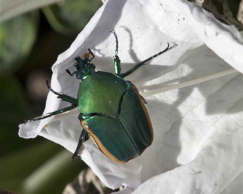 Beetles 2