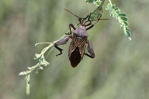 True Bugs 1
